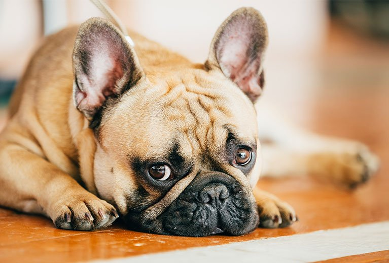 signs of anxiety in dogs