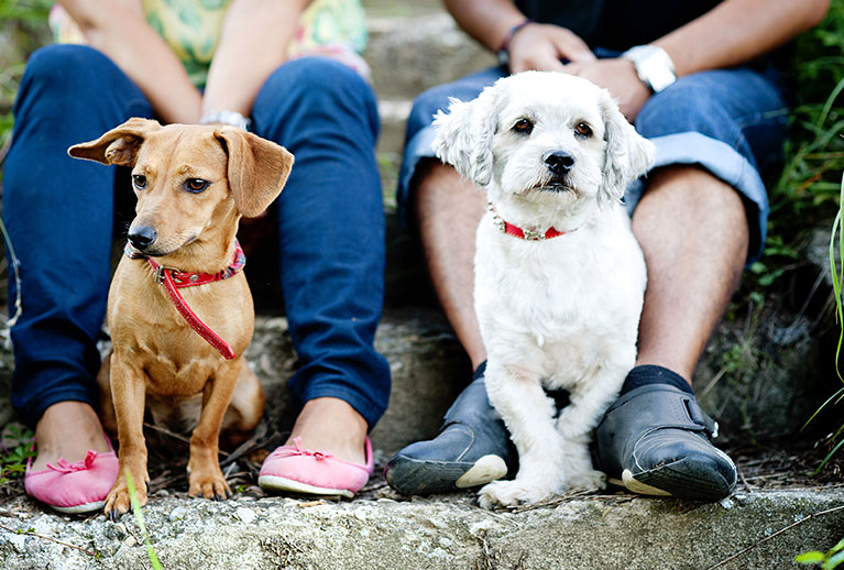 popular dog breeds for first-time owners