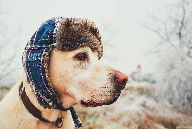 exercise your dog in winter