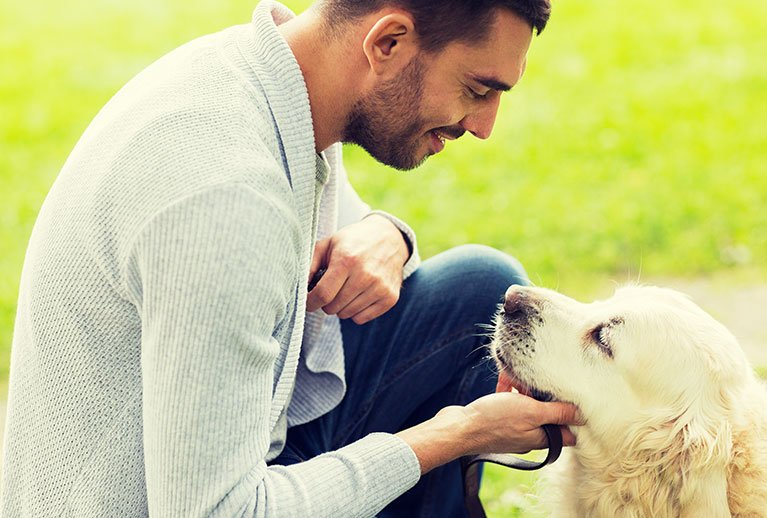 benefits of adopting an adult dog