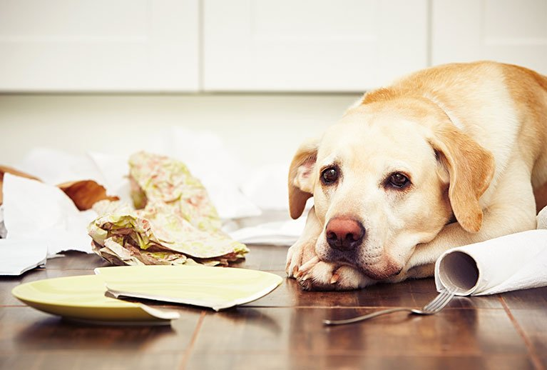 Compulsive behavior in dogs