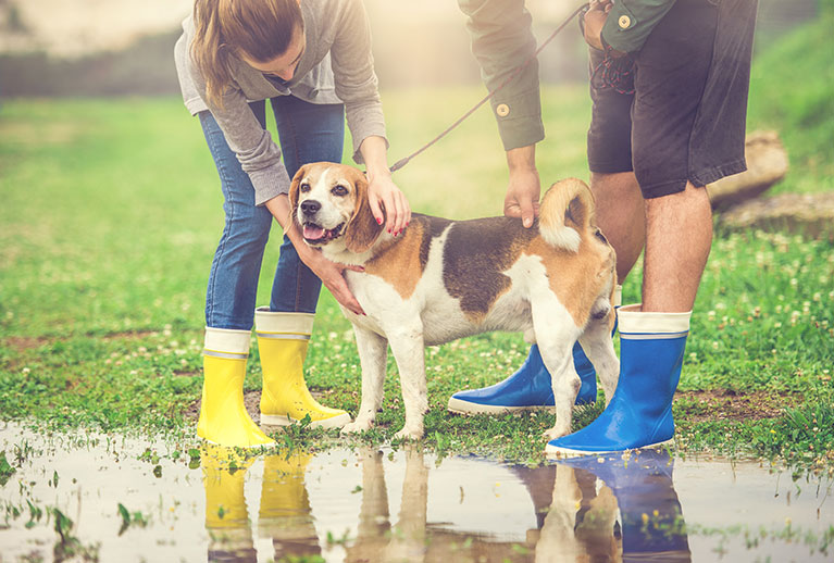 dog care during the rainy season