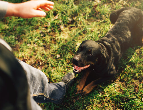 Understanding canine communication