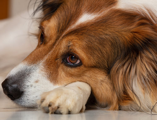 Common Allergies In Dogs