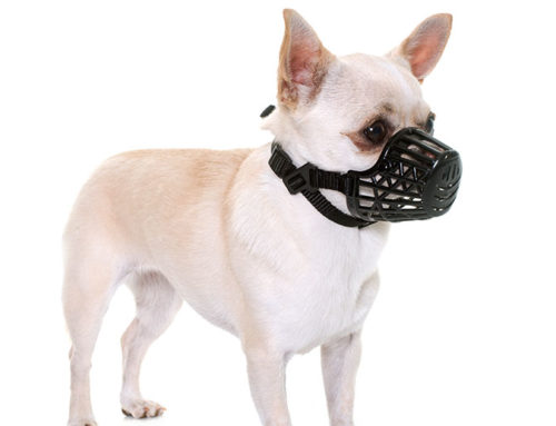 What You Should Know About Dog Muzzles?