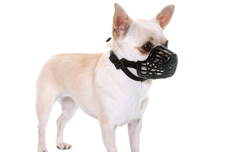 dog with muzzles
