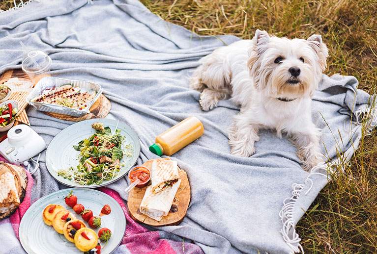Healthy-Dog-Food-Recipes-For-Senior-Dogs