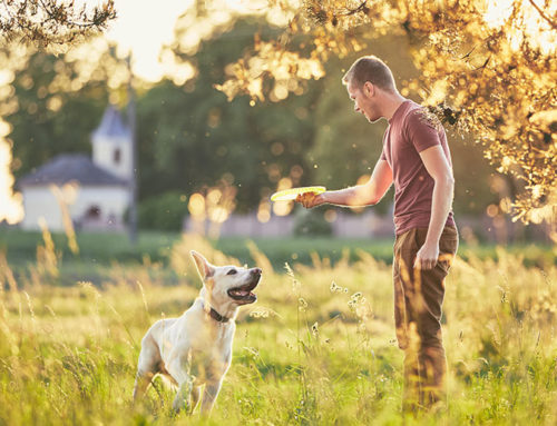 Why playtime is important for dogs?