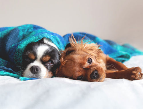 How to help your dog cope up with jet lag?