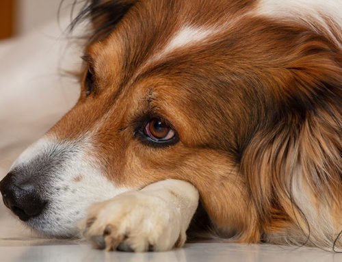 Warning Signs of Dog Depression