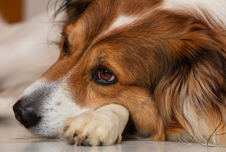 signs-of-dog-depression
