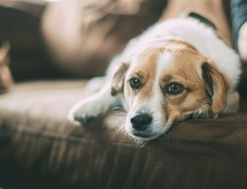 Top Reasons to Adopt a Dog Instead of Buying One
