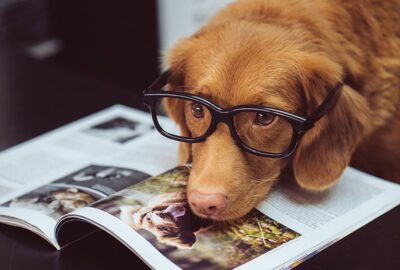 common misconceptions about dogs