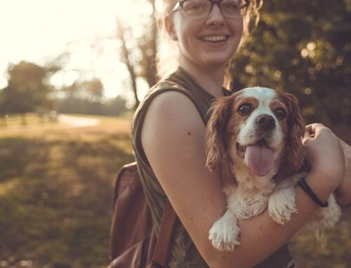 Does Your Personality Affect Your Dog's Behavior?