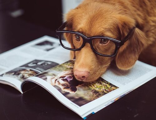 Best Dog Breeds for Aged People