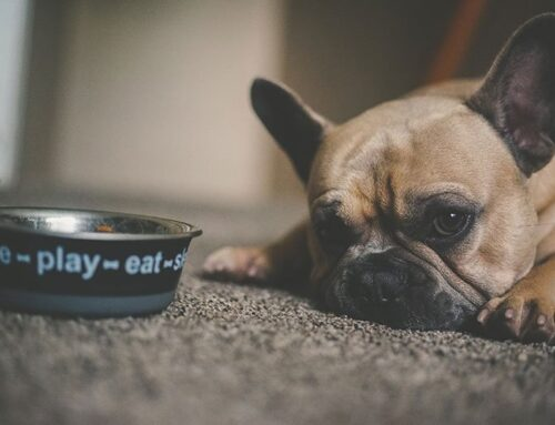 Reasons for Feeding problem in dogs