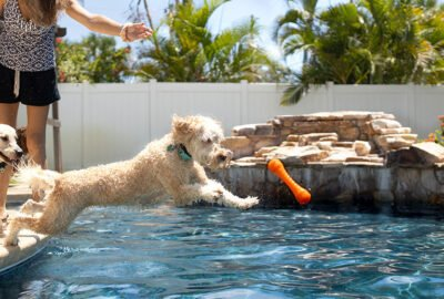 keep dog cool in summer