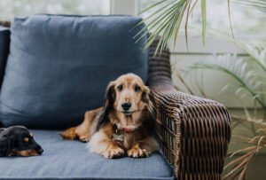 must-have essentials for senior dogs