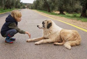 Reasons Why Dogs Dislike Certain People at First Sight